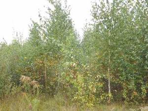 Земельный участок Козин (Конча-Заспа), M-11039 - Фото 4