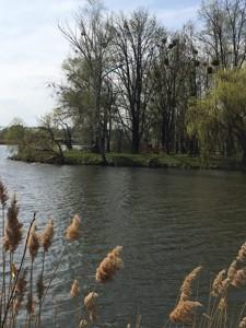 Земельный участок P-21776, Озера - Фото 12