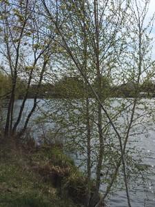 Земельный участок P-21776, Озера - Фото 13