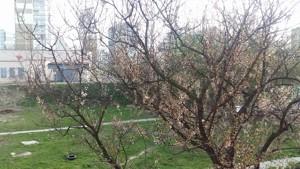 Квартира Академика Ефремова (Уборевича Командарма), 7, Киев, Z-586070 - Фото3