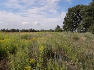 Земельный участок Малая Александровка, M-33860 - Фото 4
