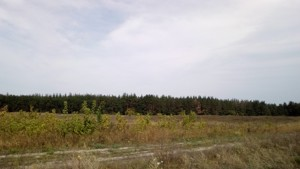 Земельный участок Погребы (Васильковский), P-24353 - Фото3