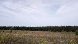 Земельный участок Погребы (Васильковский), P-24353 - Фото 5
