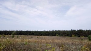 Земельный участок Погребы (Васильковский), P-24354 - Фото 5