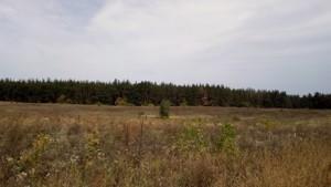 Земельный участок Погребы (Васильковский), P-24354 - Фото 6