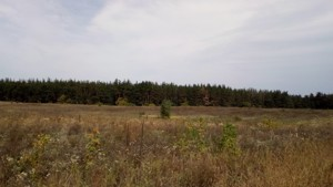 Земельный участок Погребы (Васильковский), P-24355 - Фото 6