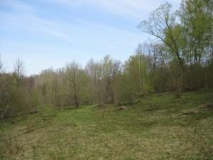 Земельный участок Полевая, Крушинка, R-21114 - Фото2