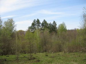 Земельный участок Полевая, Крушинка, R-21114 - Фото3