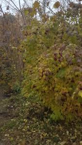 Земельна ділянка Гнідин, E-37902 - Фото 8