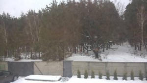 Дом Z-333511, Пороскотень - Фото 7