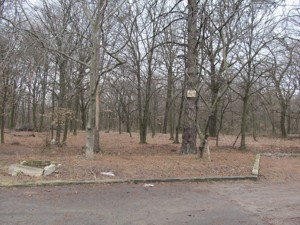 Земельный участок Лесники (Киево-Святошинский), R-24232 - Фото 10