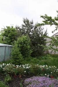 Дом Дружбы, Красиловка (Броварской), C-106410 - Фото 10