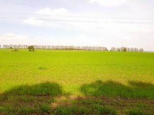 Земельна ділянка Малишка, Обухів, P-25719 - Фото 2