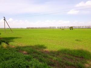 Земельна ділянка Малишка, Обухів, P-25719 - Фото 3