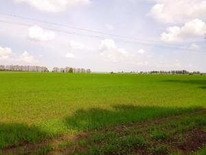 Земельна ділянка Малишка, Обухів, P-25719 - Фото 4