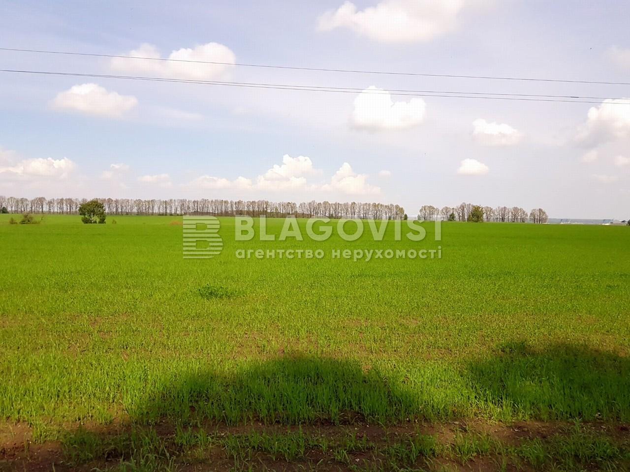Земельный участок P-25719, Малышко, Обухов - Фото 5