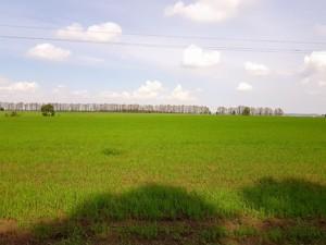 Земельна ділянка Малишка, Обухів, P-25719 - Фото 5