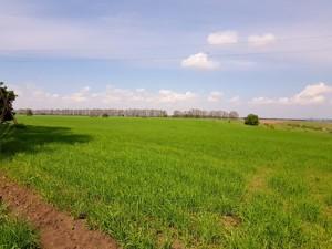 Земельна ділянка Малишка, Обухів, P-25719 - Фото 6
