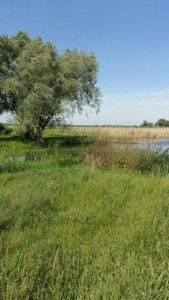 Земельна ділянка Гнідин, C-106474 - Фото 8