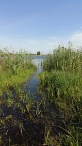 Земельный участок Гнедин, C-106475 - Фото 7
