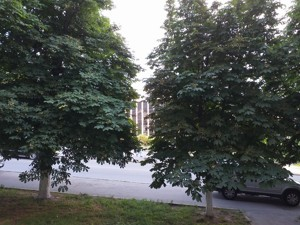 Офис, Коновальца Евгения (Щорса), Киев, D-35117 - Фото 18