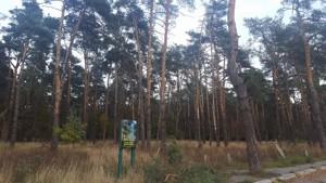 Земельный участок Елочная, Киев, A-110594 - Фото3