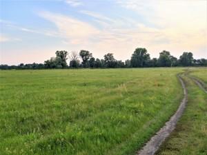 Земельна ділянка Погреби (Броварський), R-33500 - Фото