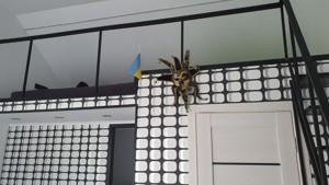 Дом P-28185, Севериновка (Макаровский) - Фото 16