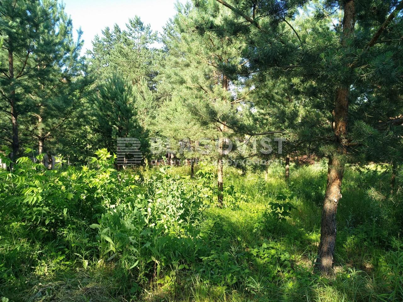 Земельный участок P-28267, Лисенко, Вита-Почтовая - Фото 4