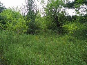 Земельный участок R-23762, Старые Безрадичи - Фото 4