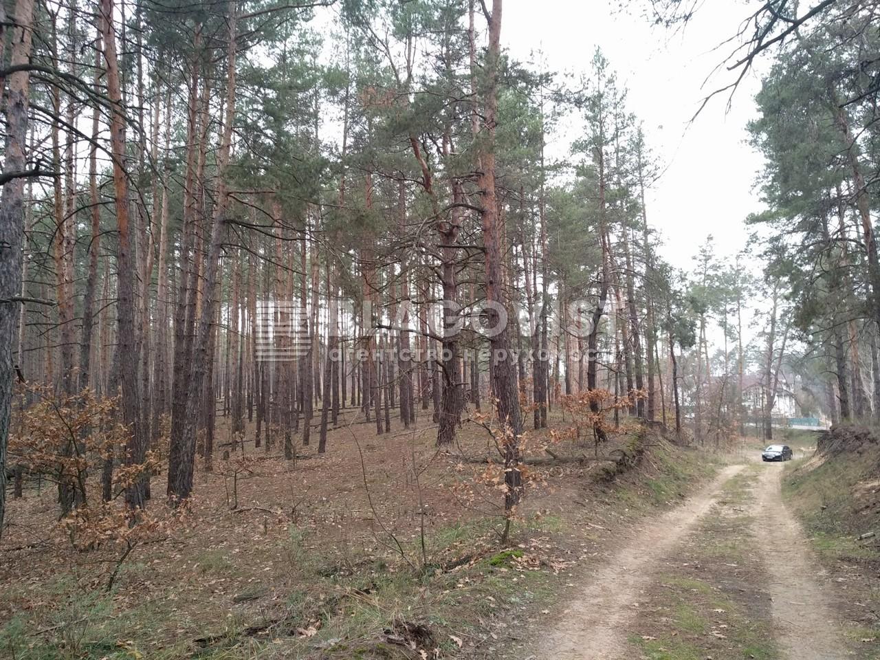 Земельный участок P-29068, Плюты (Конча-Заспа) - Фото 1