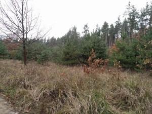 Земельный участок Плюты (Конча-Заспа), P-29068 - Фото3