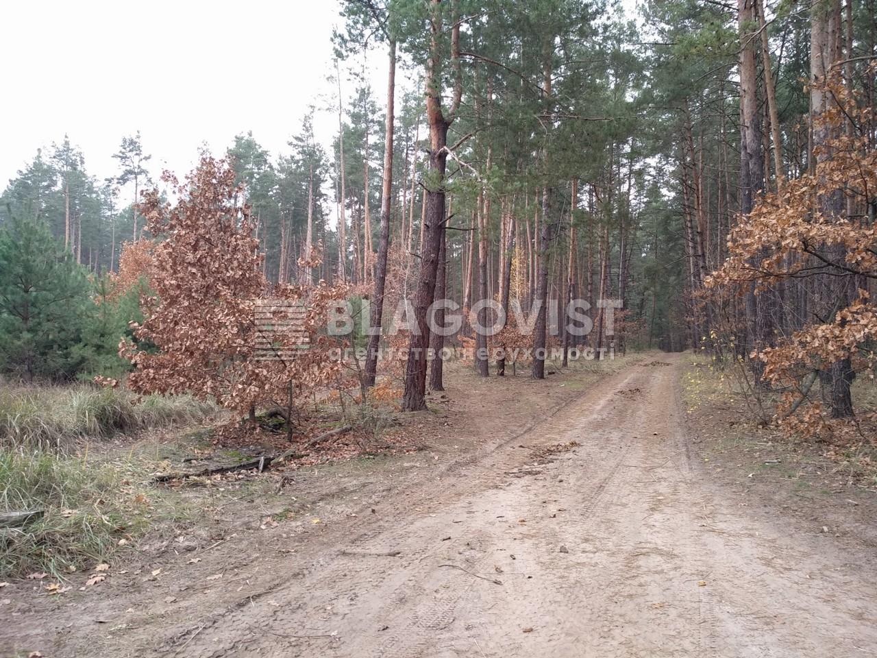 Земельный участок P-29068, Плюты (Конча-Заспа) - Фото 3
