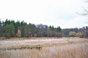 Земельный участок H-49913, Киевская, Гуровщина - Фото 4