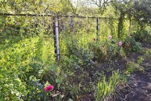 Дом Рожны, R-38786 - Фото 12
