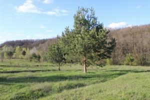 Земельный участок Старые Безрадичи, R-38731 - Фото2
