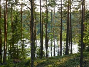 Земельный участок P-29738, Лесная, Таценки - Фото 3