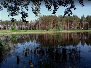 Земельный участок P-29738, Лесная, Таценки - Фото 1