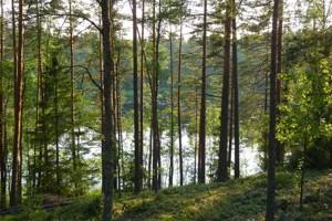 Земельный участок Лесная, Таценки, P-29739 - Фото3
