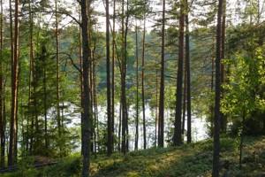 Земельный участок P-29740, Лесная, Таценки - Фото 3