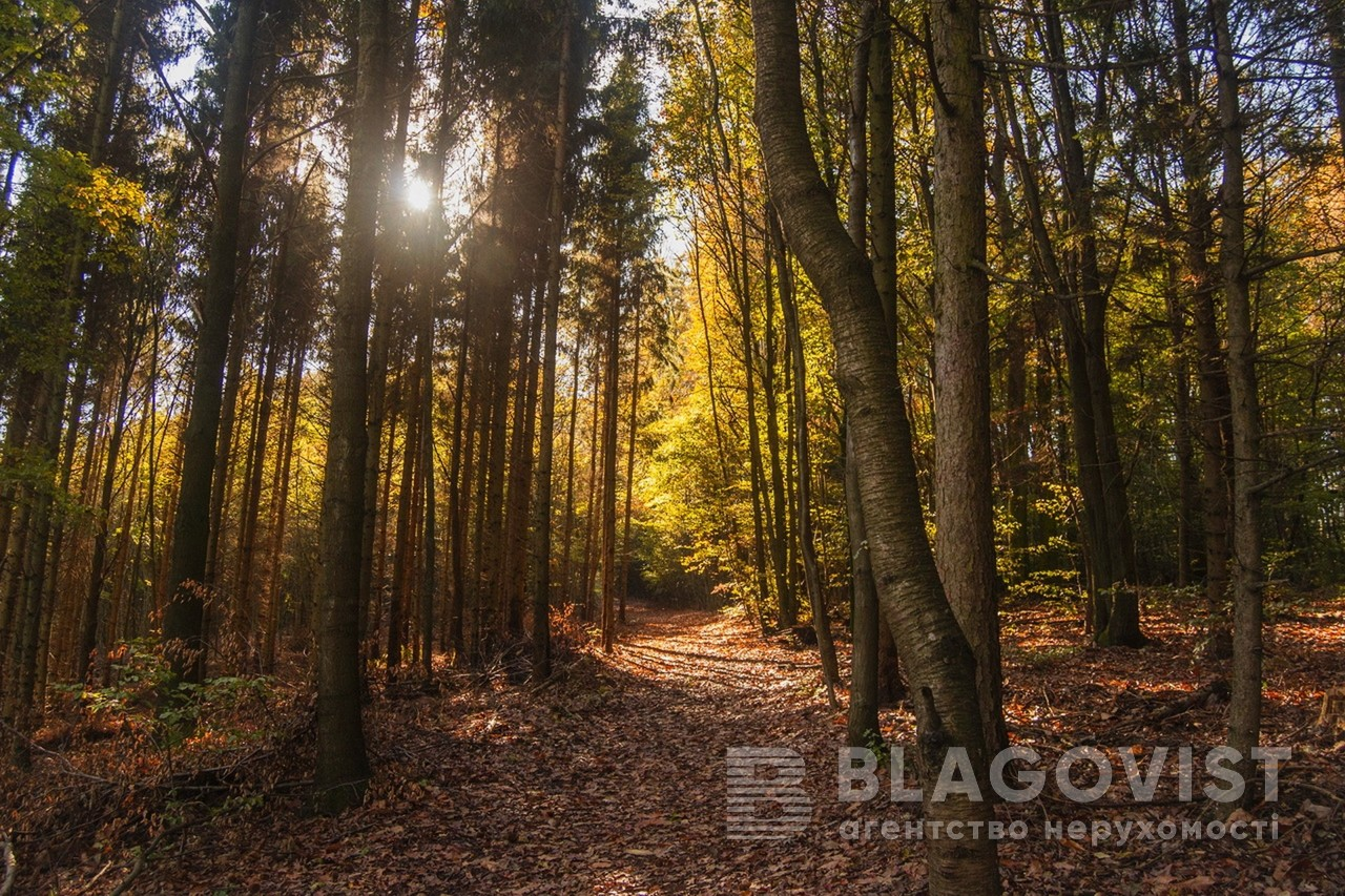 Земельный участок P-29741, Лесная, Таценки - Фото 2