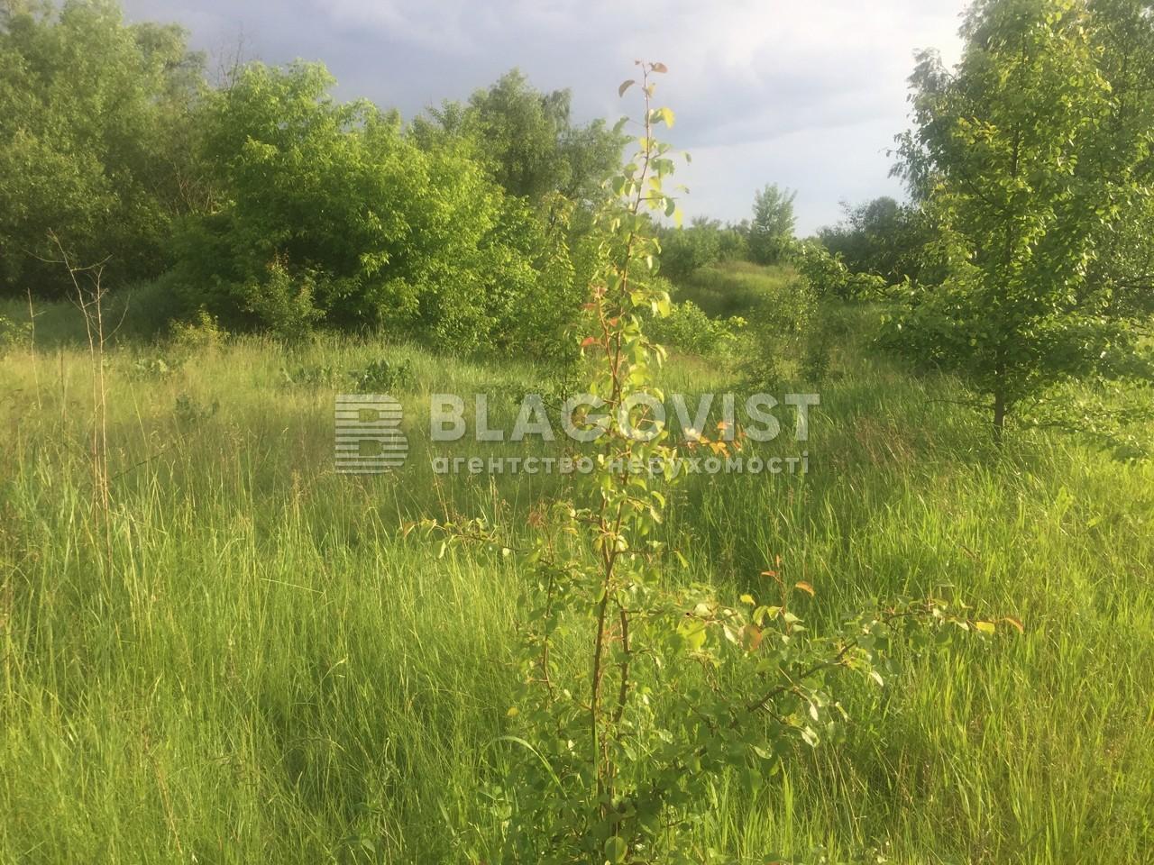 Земельный участок P-29710, Киевская, Старые Безрадичи - Фото 2