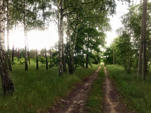 Земельный участок Приозерная, Вишенки, P-29754 - Фото3