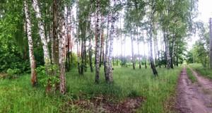 Земельный участок Приозерная, Вишенки, P-29757 - Фото2