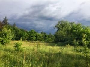 Земельный участок Приозерная, Вишенки, P-29760 - Фото2