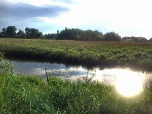 Земельный участок Приозерная, Вишенки, P-29761 - Фото2