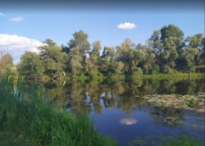 Земельный участок P-29758, Приозерная, Вишенки - Фото 12