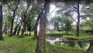 Земельный участок Приозерная, Вишенки, P-29760 - Фото 15