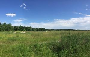 Земельный участок Приозерная, Вишенки, P-29800 - Фото