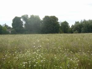 Земельный участок R-39679, Осыково - Фото 9